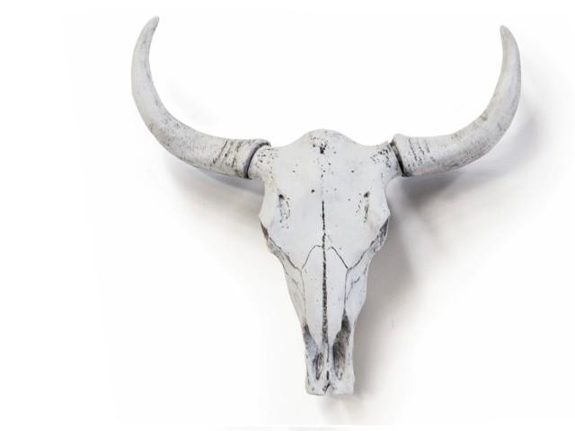 Bull Skull – White